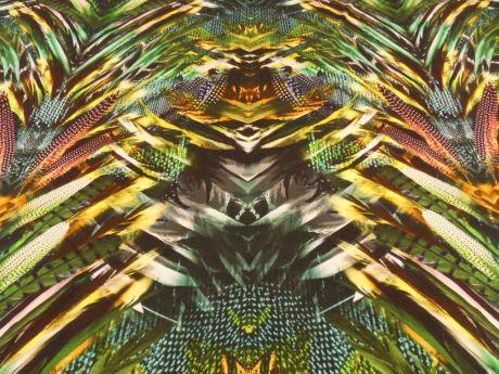 Papaya- Barwna Dżungla